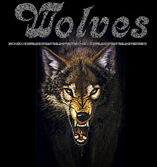 Wolf Posters, Wolves Art